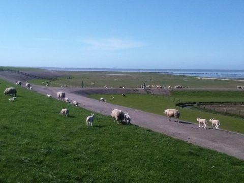 zeedijk Friesland
