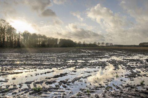 Landbouwgrond. Foto: iStock / Frans Willem Blok