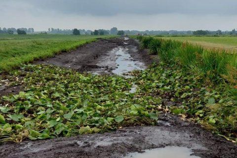 Dijk bij Reeuwijk. Foto: Hoogheemraadschap van Rijnland
