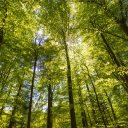 Bos, bomen. Foto: iStock / Sander Meertins